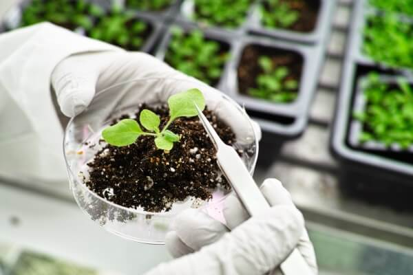 End of patents for plants